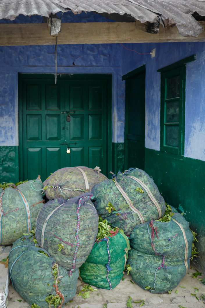 tea bag India